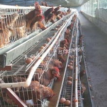 广州工厂供应绿壳蛋鸡圈养殖笼具 集中饲养鸡场铁丝网笼