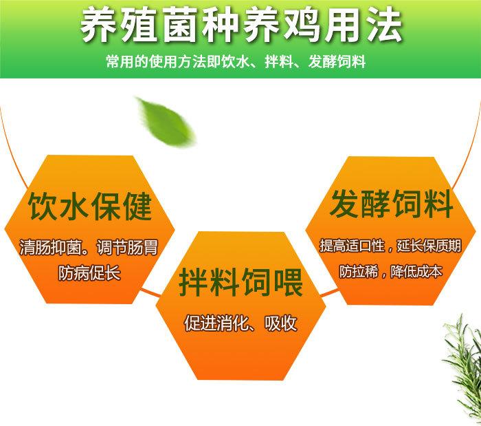 养鸡微生物菌剂