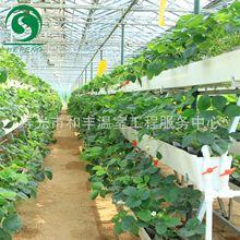 基质栽培草莓立体栽培槽椰糠栽培无土栽培瓜果种植槽蔬菜种植槽