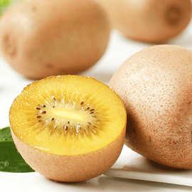 浦江黄心猕猴桃5斤特大果当季新鲜水果整箱包邮精品水果