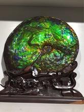 加拿大斑彩螺化石 斑彩石 古动物化石 古生物化石 收藏观赏石