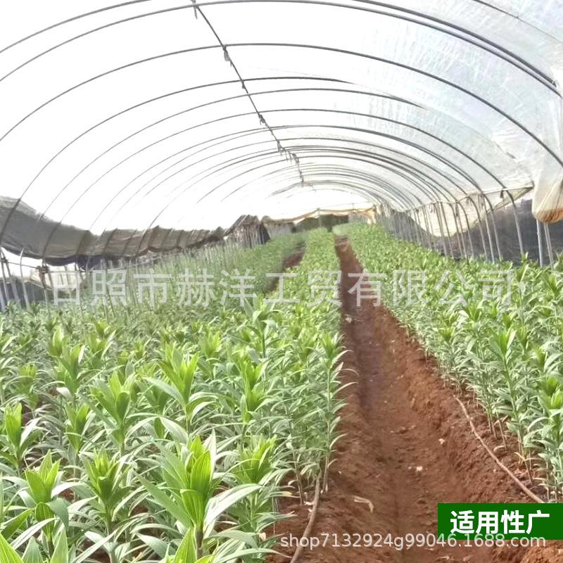 厂家现货哈茨木霉菌淡紫青霉菌微生物冲施肥水溶性有机肥料批发