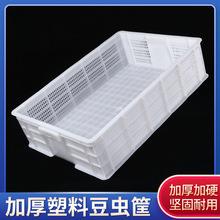 塑料豆虫筐平底多功能周转筐冷冻筐长方形环保塑料筐直销可印LOGO