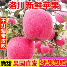 2020陕西红富士脆甜苹果洛川红富士苹果新鲜当季水果产地直发批发