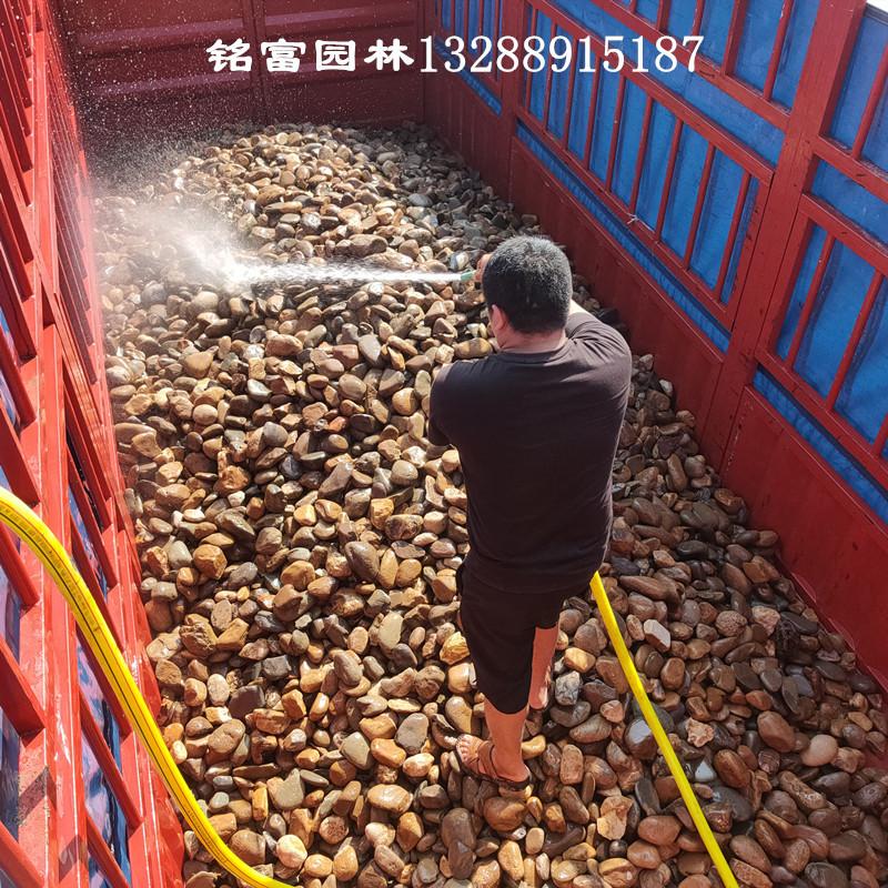 清洗干净的鹅卵石价格-天然的鹅卵石图片-清洗的鹅卵石图片