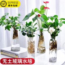小植物盆栽易活小型可爱家养花卉室内桌面绿植护眼迷你真花摆件