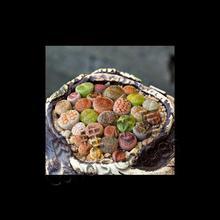 南非FDP进口 生石花混合种子 萌肉多肉花植物迷你多肉 石生花种孑