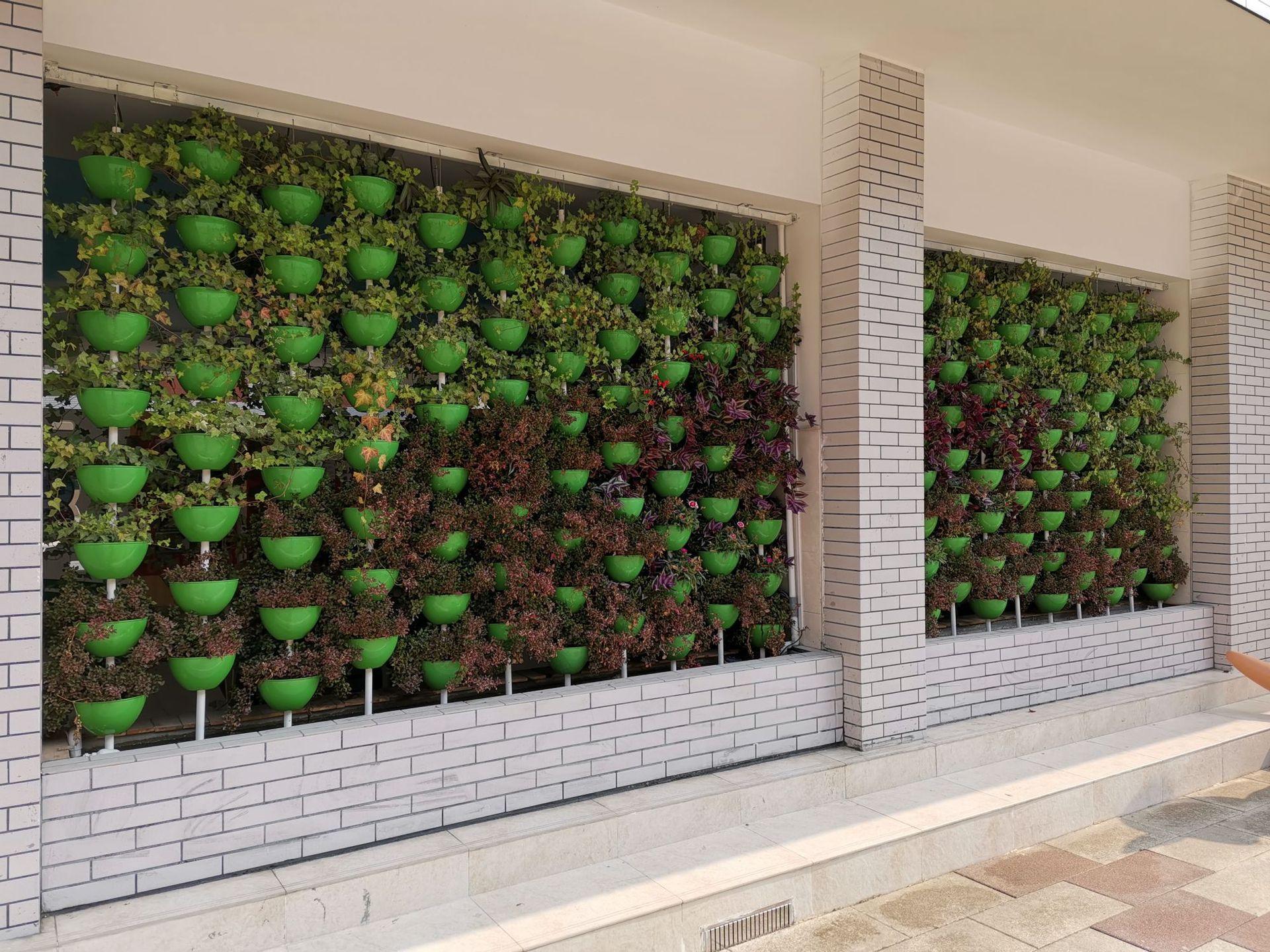 供学校家庭鱼菜共生植物墙绿植墙 水培蔬菜营养土种植设备