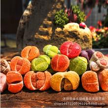 多肉植物 100粒生石花混合种子 30多个品种 红绿齐全 绿植盆栽