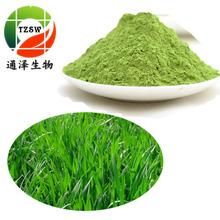 小麥草提取物 10:1標準比例提取 天然小麥草粉 植物萃取原料粉