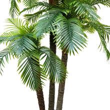 仿真椰子展树椰树树内装饰热带植物仿真棕榈假配底板酒店室厅摆放