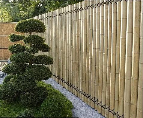 生产出口优质竹竿茶竹 苦竹竹篱笆竹签竹围墙竹屏风