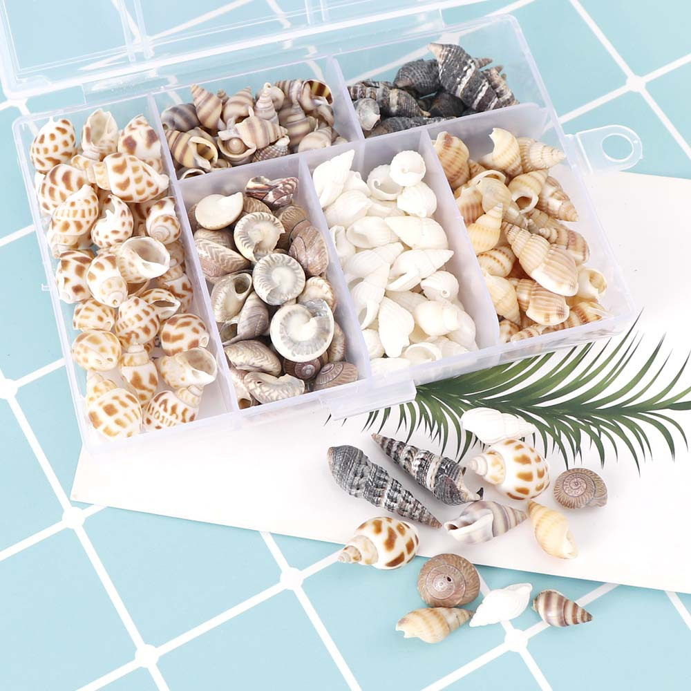 100克混款贝壳海螺 天然小花螺水族箱造景鱼缸微景观装饰 diy配件