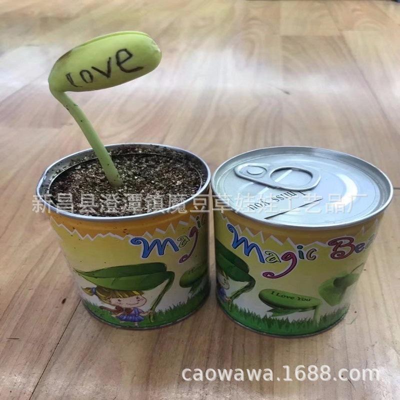 种植长字栽培种植爱情友情祝福长字魔豆红豆白豆吉祥豆