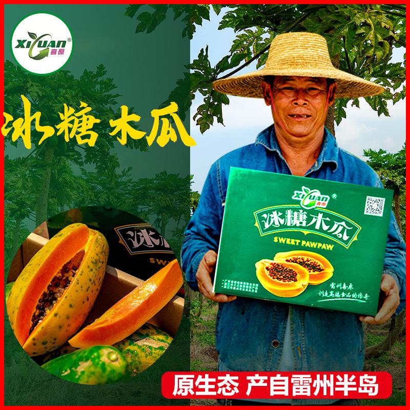 雷州喜原冰糖木瓜新鲜水果红心牛奶木瓜湛江特产当季树摘有机水果