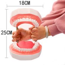 6倍放大口腔教学 牙科材料 齿科耗材  假牙 六倍带舌头牙齿模型