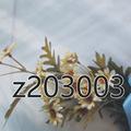 ——————包y抽绳女士休闲运动鞋 z203003