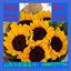 【向日葵】云南昆明鲜切花基地批发太阳花泰迪向日葵鲜花直批团购