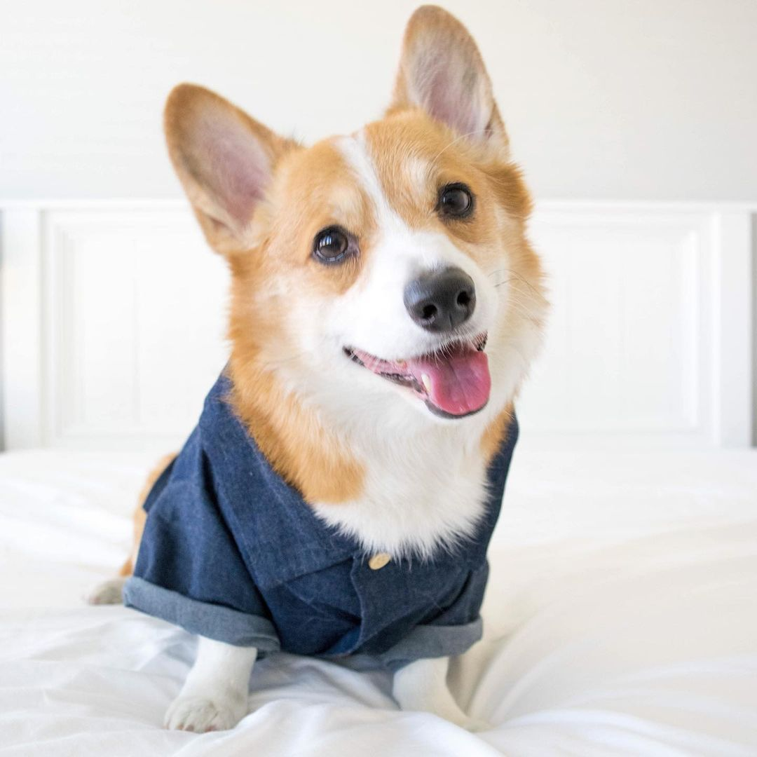 summer clothes for small dogs